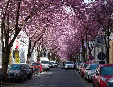 Những con đường đẹp nhất hành tinh - 9