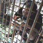 Tin tức trong ngày - TQ: Mẹ nhốt con trong lồng sắt suốt 11 năm