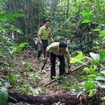An ninh Xã hội - Cán bộ bảo vệ rừng bị đánh liệt nửa người