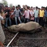 Tin tức trong ngày - Tàu hỏa tông chết 4 con voi tại Ấn Độ