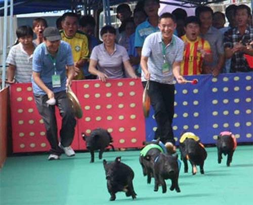 Kỳ thú hội đua heo ở Trung Quốc - 7