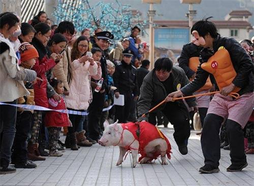Kỳ thú hội đua heo ở Trung Quốc - 8
