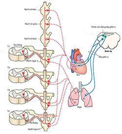 Phương pháp điều trị rối loạn thần kinh thực vật - 1