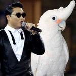 """Phi thường - kỳ quặc - Clip: Vẹt nhảy Gangnam Style """"cực đỉnh"""""""