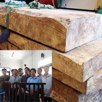 Xét xử vụ đốn hạ gỗ sưa trăm tỷ