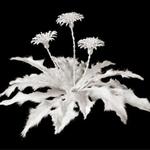 Phi thường - kỳ quặc - Kinh ngạc vì những bộ xương… nở hoa