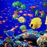 Du lịch - Rực rỡ sắc màu của đại dương
