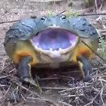 """Phi thường - kỳ quặc - Video: Phát hiện ếch """"quái vật"""""""