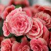 Kinh doanh bằng niềm đam mê hoa