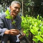 Thị trường - Tiêu dùng - Nhà vườn đổ xô mua cây giống đặc sản
