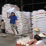 Thị trường - Tiêu dùng - Giá lúa gạo tiếp tục giảm