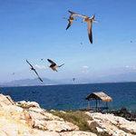 Du lịch - Ngất ngây đảo yến trên vịnh Nha Trang