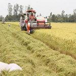 Thị trường - Tiêu dùng - Thủ tướng phê duyệt Đề án tái cơ cấu nông nghiệp