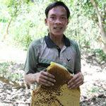 """Tin tức trong ngày - Săn ong mật: Nghề của những """"lá gan lớn"""""""