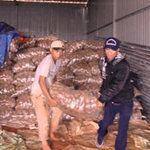 Phát hiện 26 tấn khoai tây TQ nhiễm độc