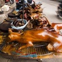 Ăn thịt chó có phi nhân đạo?