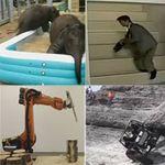 Cười 24H - Top clip hài: Những kết thúc Funny