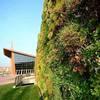 Những bức tường 'sống' của thiên nhiên