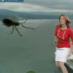 """Phi thường - kỳ quặc - Video: MC bị sốc vì nhện """"khổng lồ"""""""