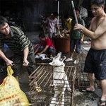 Tin tức trong ngày - TQ: Tranh cãi quyết liệt tại lễ hội thịt chó