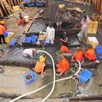 Tin tức trong ngày - Toàn cảnh khai quật tàu đắm chứa cổ vật