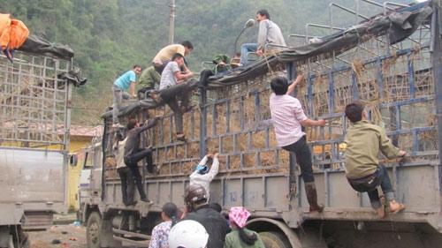 Cò mồi, xin đểu, mót dưa ở cửa khẩu Tân Thanh - 1