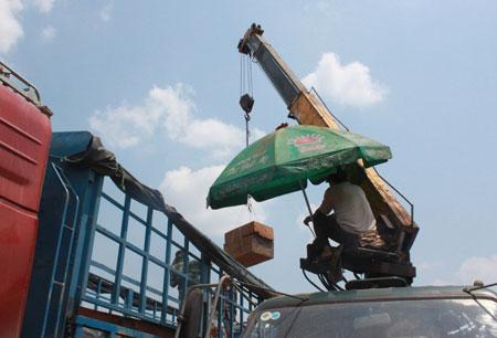 """Xem """"xe vua"""" chở gỗ khủng tự hạ tải - 10"""