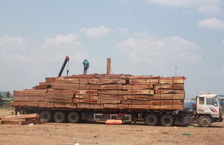 """Xem """"xe vua"""" chở gỗ khủng tự hạ tải - 3"""