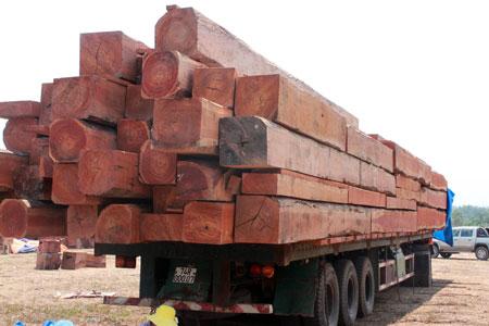 """Xem """"xe vua"""" chở gỗ khủng tự hạ tải - 9"""