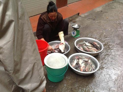 Cá trắm hồ Tây giá nửa triệu đồng vẫn hút khách - 1
