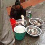 Thị trường - Tiêu dùng - Cá trắm hồ Tây giá nửa triệu đồng vẫn hút khách