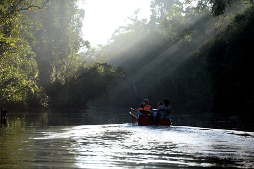 Vương quốc' đười ươi, khỉ mũi dài ở Malaysia - 2
