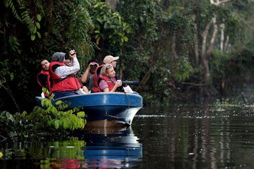 Vương quốc' đười ươi, khỉ mũi dài ở Malaysia - 3