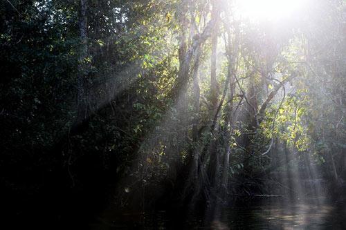 Vương quốc' đười ươi, khỉ mũi dài ở Malaysia - 4