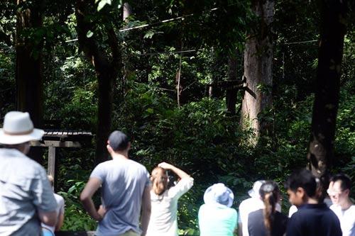 Vương quốc' đười ươi, khỉ mũi dài ở Malaysia - 9