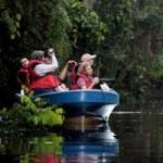 Du lịch - Vương quốc' đười ươi, khỉ mũi dài ở Malaysia