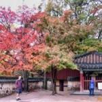Du lịch - Lạc mất trái tim tại Hàn Quốc