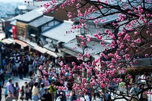 Mùa hoa anh đào nở rực rỡ Nhật Bản - 1