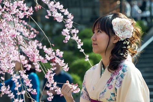 Mùa hoa anh đào nở rực rỡ Nhật Bản - 2
