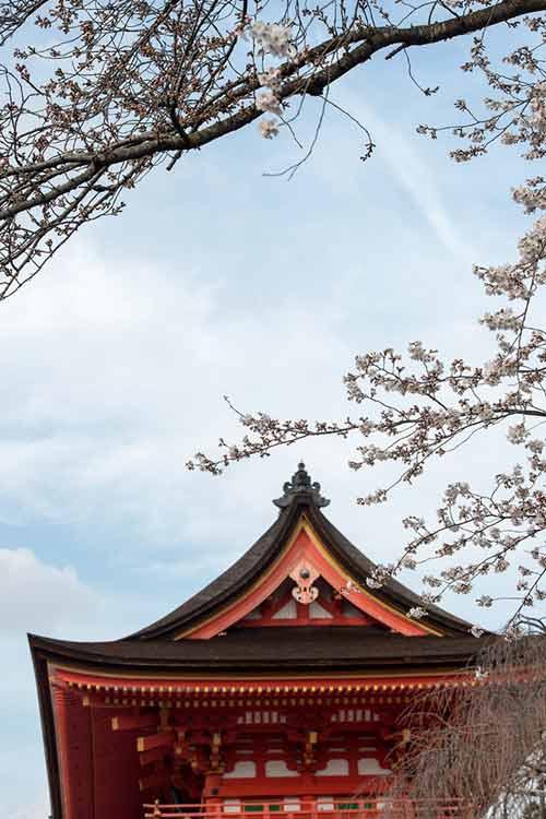 Mùa hoa anh đào nở rực rỡ Nhật Bản - 4