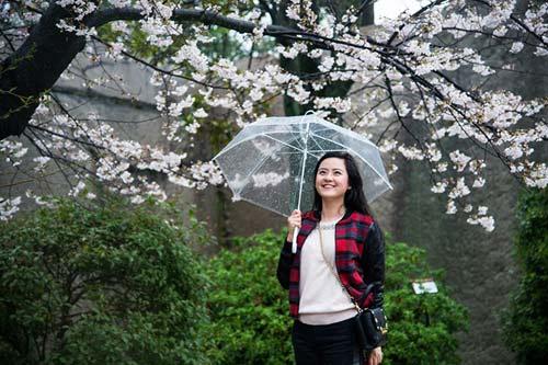 Mùa hoa anh đào nở rực rỡ Nhật Bản - 6