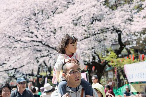Mùa hoa anh đào nở rực rỡ Nhật Bản - 9