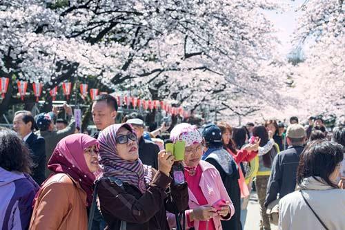 Mùa hoa anh đào nở rực rỡ Nhật Bản - 10