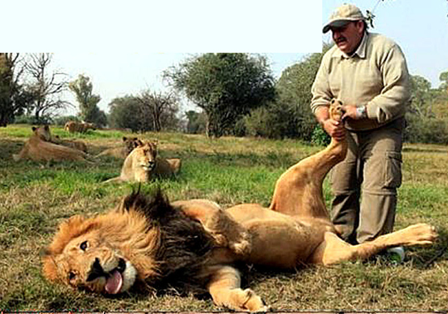 """Điều ai đã từng sống chung với  """" sư tử Hà Đông """"  đều nhận ra, đó là chúng thích được chăm sóc."""