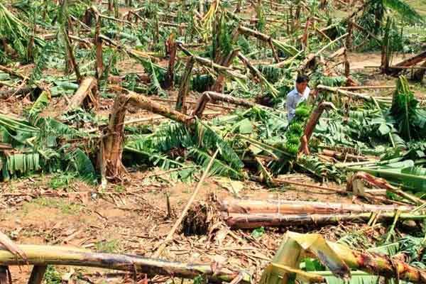 Năm 2014, Việt Nam hứng chịu khoảng 10 cơn bão - 2
