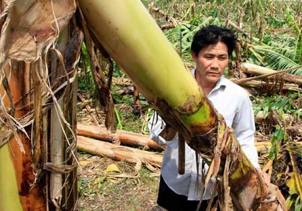 Năm 2014, Việt Nam hứng chịu khoảng 10 cơn bão - 3