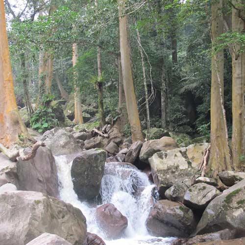 Quảng Bình: Rộ tin đồn dân trúng gỗ sưa tiền tỷ - 2