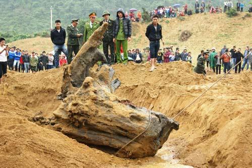Quảng Bình: Rộ tin đồn dân trúng gỗ sưa tiền tỷ - 1