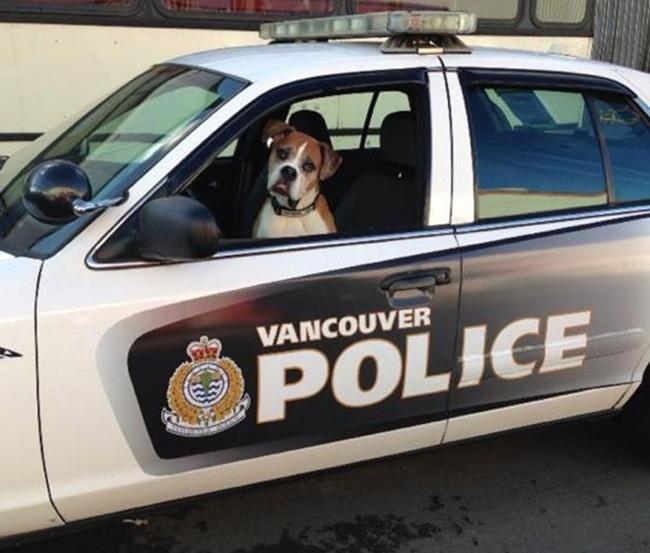 Riina Cooke, 32 tuổi, sống ở Canada đã thực hiện một bộ ảnh đặc biệt cho bạn thân nhất của mình, chú chó Romeo 9 tuổi mắc bệnh ung thư.