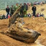 Tin tức trong ngày - Quảng Bình: Rộ tin đồn dân trúng gỗ sưa tiền tỷ